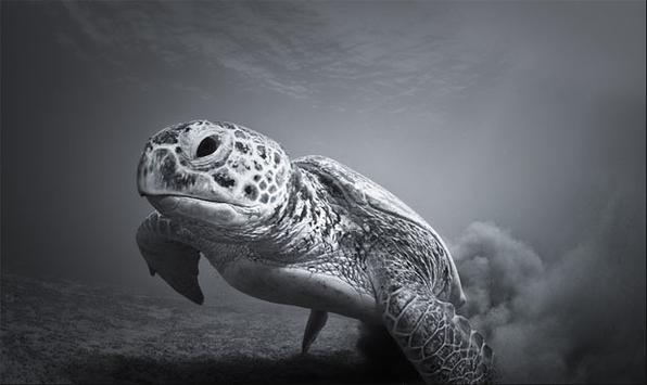 Foram anunciados os vencedores do prêmio de fotografia do Zoológico de Londres. Vaclav Krpelik foi o vencedor na categoria 'Profundo e Significativo' com esta foto de uma tartaruga no Mar Vermelho.  -