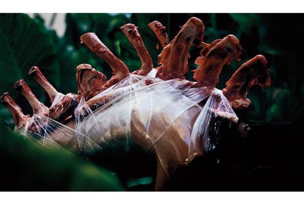Imagens de animais e da ação do tempo sobre eles compõem parte do ensaio fotográfico, realizado em locais muitas vezes isolados, tanto na Serra Gaúcha quanto no litoral do Estado. Foto: Edu Monteiro -