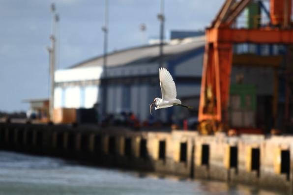 Até abril, o Recife vive a temporada de cruzeiros. Hoje o Porto recebe os navios Costa Pacífica, Seven Seas Mariner e Costa Facinosa. Foto: Paulo Paiva/DP -