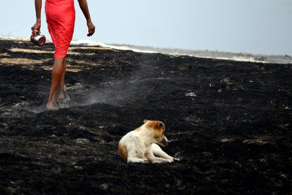 Devota Hindu indiana passa por um cão sobre as cinzas da queima da casca, nas margens do rio Ganges em Allahabad. A casca tinha sido colocado durante o festival Magh Mela para proteger peregrinos de caírem sobre a área do rio escorregadio. / AFP / SANJAY Kanojia   -