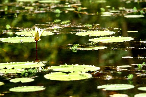 Reserva ecológica em Lagoa dos Gatos.Foto: Rafael Martins/Esp. DP -