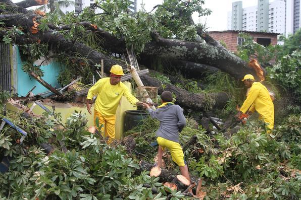 Árvore cai e atinge três imóveis no bairro do Monteiro, Zona Norte do Recife. Foto: Júlio Jacobina / Diario de Pernambuco. -