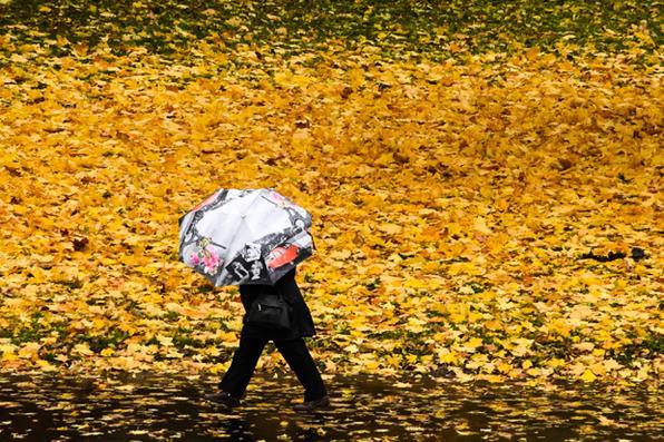 Mulher caminha  entre  folhas amarelas caídas no subúrbio de Moscou. Foto: AFP PHOTO / Kirill KUDRYAVTSEV -