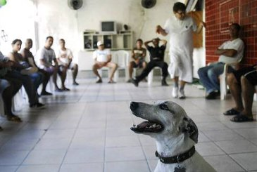 Freud, mascote do Caps Boa Viagem, auxilia no tratamento de pacientes com transtorno mental (Helder Tavares/DP/D.A Press )