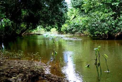 Esgotos e lixo das casas s�o os principais motivos de polui��o dos rios. (Rafaela Tabosa/ON/D.A.Press)