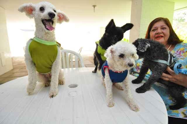 Além dos animais que mantém no abrigo, Simone cria quatro cães em seu apartamento. Foto: Eduarda Bione/Esp.DP/D.A Press(Eduarda Bione/Esp.DP/D.A Press)
