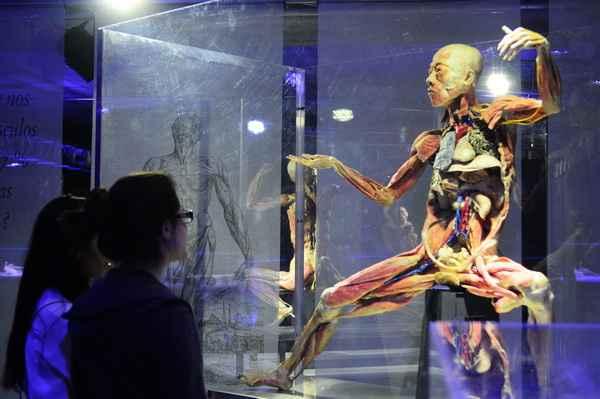 Exposicao  Corpos Humanos no Shopping Center Recife. (Bruna Monteiro Esp.DP/D.A Press)