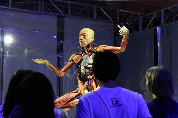 Público fica diante de corpos de verdade, com órgãos à mostra. Foto: Bruna Monteiro/ DP/ D.A.Press