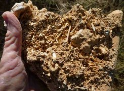 Imagem divulgada pela Universidade de Queensland em julho mostra fósseis encontrados em Cairns, Austrália. Foto: AFP/The University of Queensland/Douglas Irvin