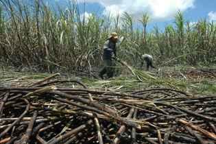 Comissão pode ajudar produtores atingidos pela seca na Zona Mata. Foto: Marcelo Lyra/Esp. DP/D.A Press/Arquivo