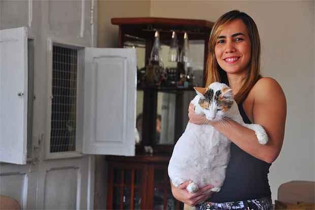 A gata Mel, de sete anos, perdeu três quilos antes que a tutora notasse que ela estava anoréxica. Gata já voltou ao peso anterior (Maria Eduarda Bione/ DP/ D.A Press)