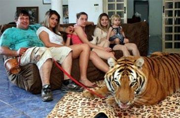 Família Borges com um dos tigres na sala de casa (Meu Mascote/Reprodução)
