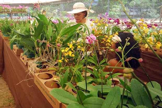 Os visitantes poderão participar cursos dinâmicos, oficinas de cultivo e palestras sobre orquídeas gratuitamente. Foto: Maria Eduarda Bione/Esp.DP/D.A Press/Arquivo