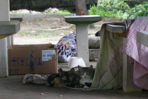 ONG tenta ajudar os animais que são abandonados. Foto: Mayra Cavalcanti/Esp. Diario/D. A Press