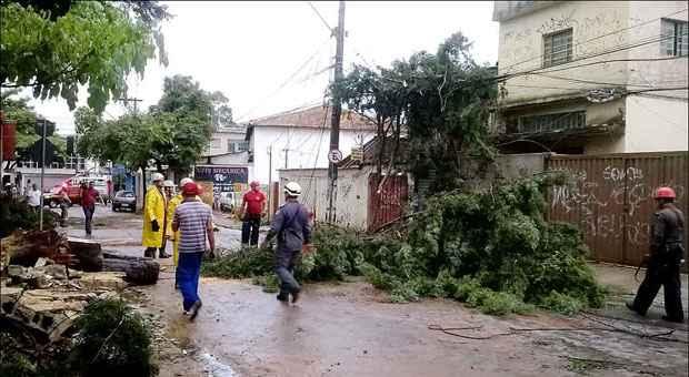 Duas �rvores ca�ram na Rua Hoffman, no Barreiro, e uma atingiu muro de um col�gio. Foto: Lahanna Lima/Divulga��o