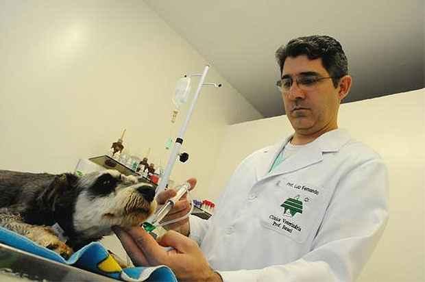 O veterinário Luiz Fernando Lucas Ferreira vem usando as células-tronco há um ano e já vê vários resultados positivos. Foto: Euler Júnior/EM/D.A Press