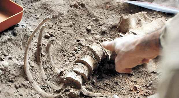 Esqueletos do casal de idosos descobertos no s�tio foram enterrados juntos