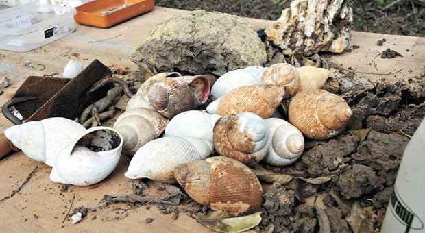Descoberta de conchas comprova que a regi�o era oceano h� milh�es de anos