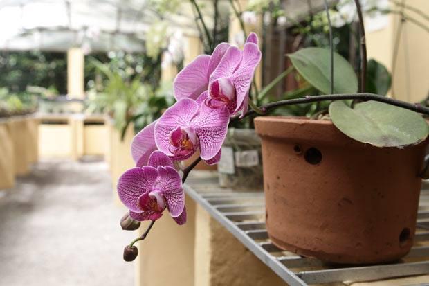 Beleza das orquídeas chama a atenção do visitante. Foto: Alcione Ferreira/DP/DA Press