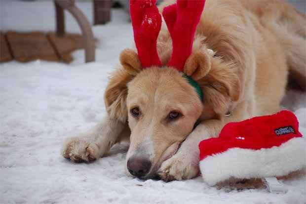 A decisão de dar um bichinho de estimação como presente de Natal deve ser ponderada em relação aos custos e à disponibilidade do presentado em cuidar do animal. Foto: Sadie Hart/Flickr/Divulgação