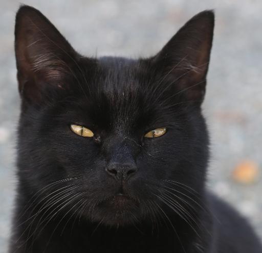 Um gato é visto em Larnaca, Chipre, no dia 15 de dezembro de 2014. Um estudo revela que gatos mais velhos podem ter convulsões após ouvirem determinados sons agudos altos. Foto: AFP/Arquivos Patrick Baz