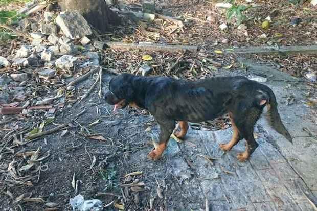 Animal desnutrido tinha dificuldade de caminhar. Foto: Carlos Brito/Divulgação