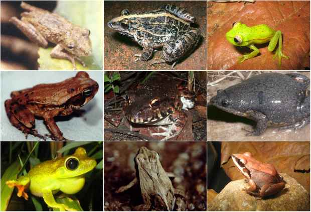 pernambuco desenvolve lista oficial de animais ameaçados de extinção