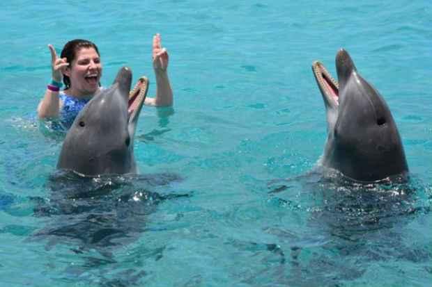 Golfinhos são atração à parte em Curaçao. Foto: Divulgação