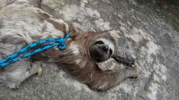 Animal estava com ferimento na patinha. Foto: Corpo de Bombeiros/Divulgação
