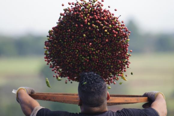 O café é consumido em 98,2% dos lares brasileiros, segundo a Associação Brasileira da Indústria de Café (Abic). Foto: Agência Brasil
