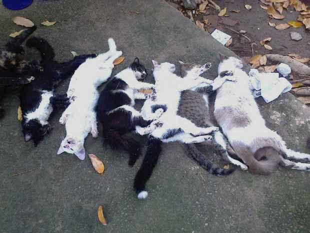 Animais foram encontrados mortos na manhã do sábado. Foto: Sonia Cordeiro/Cortesia