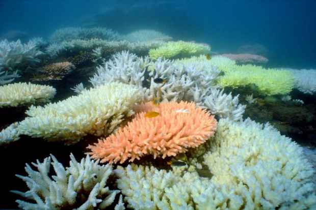 Foto: Great Barrier Reef Marine Park Authority/AFP
