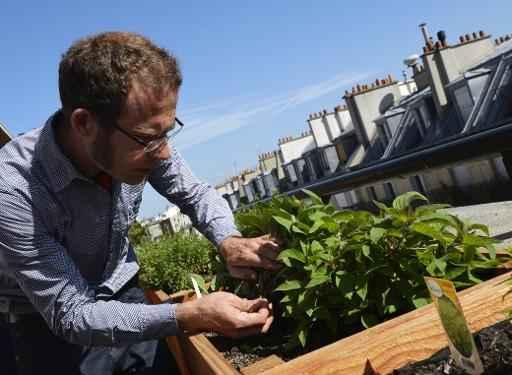 O engenheiro Nicolas Bel na horta do terraço do edifício da Ferrandi School of Culinary Arts in Paris, no dia 18 de maio de 2015. Foto: MIGUEL MEDINA/ Arquivos/ AFP