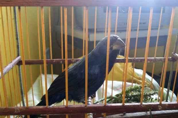 Animais silvestres são encontrados em cativeiro irregular. Foto: WhatsApp/Divulgação