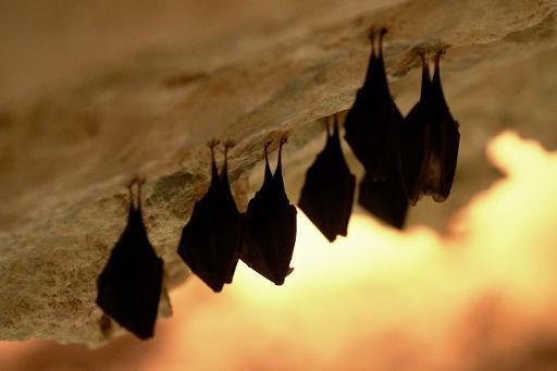 Morcegos são vistos em caverna em Mikulov, República Tcheca. Foto: Radek Mica/AFP