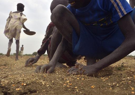 (Fevereiro) Crianças do Sudão do Sul recolhem grãos na cidade de Nyal. Foto:Tony Karumba/ AFP