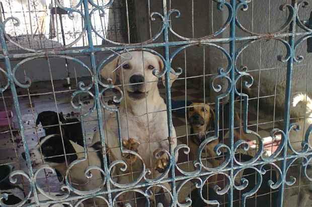 Animais viviam em situação precária, doentes e famintos. Foto: Sidney Niceas/Projeto Mascote de Rua/Divulgação