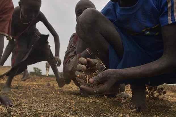 Crianças recolhem grãos derramados no solo, no vilarejo sul-sudanês de Nyal. Foto: Tony Karumba/AFP
