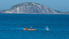 A baleia ficou presa na rede de pescadores desde ontem (9). Foto:Tânia Rêgo/Agência Brasil