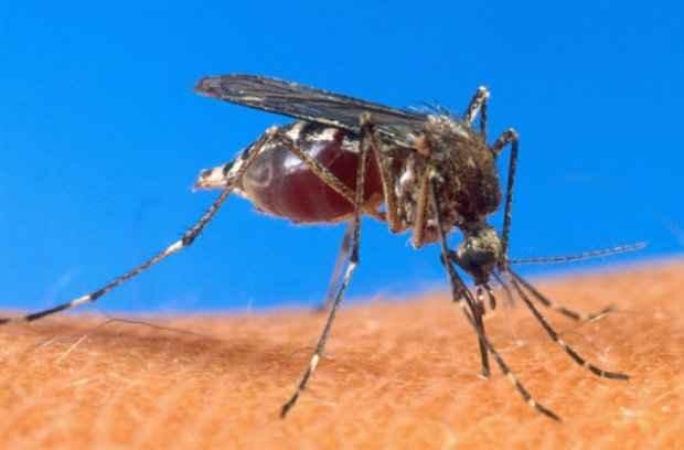 A vacina contra dengue do laboratório francês Sanofi é eficaz em mais de 80% dos pacientes afetados pela infecção. (Foto: Arquivos Ho/AFP Photo)