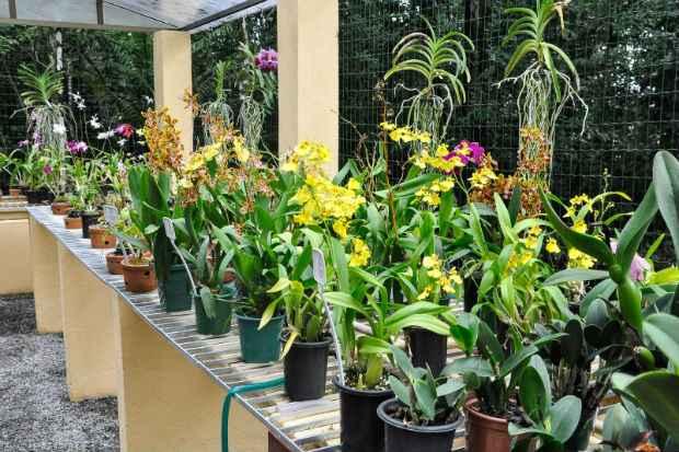 Jardim Botânico do Recife está entre os cinco melhores do país. Foto: PCR/Divulgação