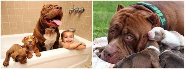 Os cães brincam com o filho do casal, Jordan. Fotos: Reprodução da internet