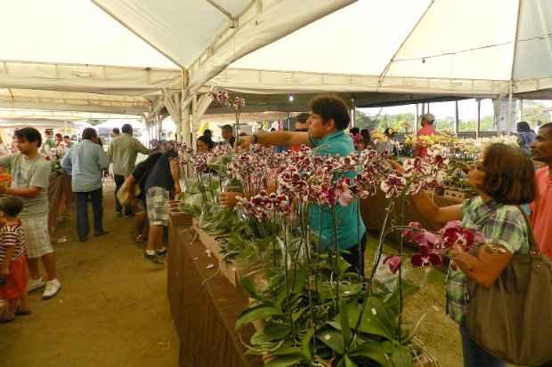 Foto: Festival de Orquídeas/Divulgação