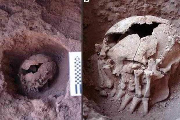 Crânio na sepultura, a 55cm de profundidade. Ao lado (D), detalhe da mão amputada que esconde a cabeça. Foto: Max Planck de Antropologia Evolucionária/Divulgação