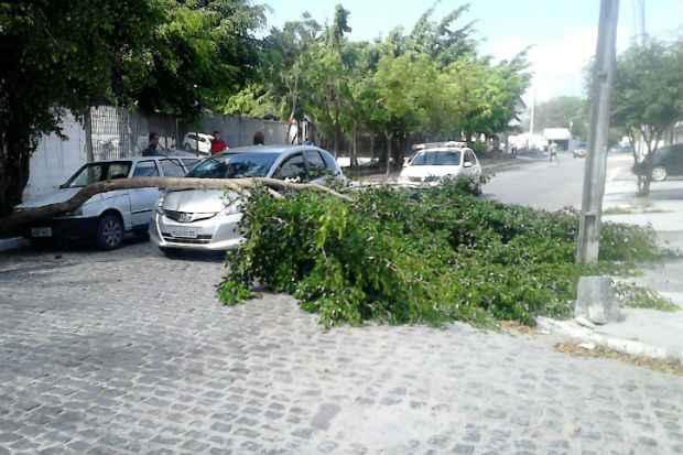 O tronco da árvore atingiu um veículo.Foto: Ana Paula/ Reprodução/ WhatsApp