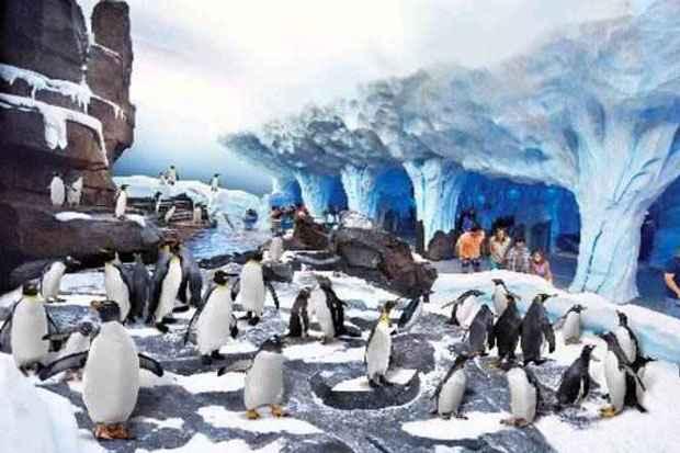 Em Orlando, um exemplo de vida na Antártida precisa de uma superestrutura para manter temperaturas ideias para os pinguins, que são de verdade (Seaworld/Divulgação)