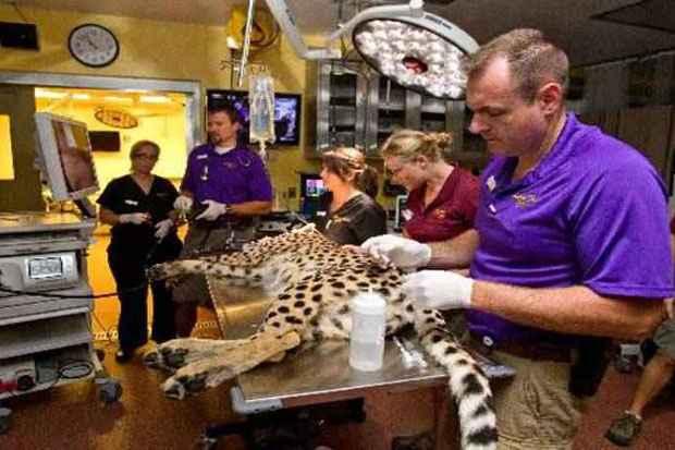 Centro especializado cuida dos bichos do Busch Gardens e também de animais encontrados nos arredores do parque (Seaworld/Divulgação)