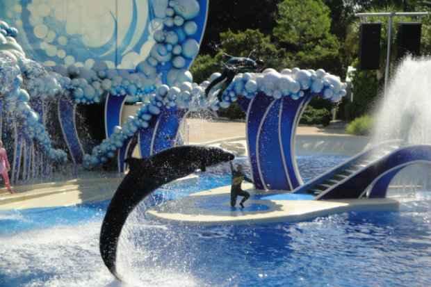 SeaWorld deve trocar atração em 2017. (Foto: Domínio público)