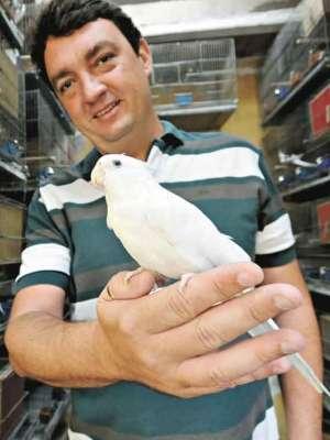 Criador de calopsitas, Alberto Petrillo diz que é preciso estabelecer contato com a ave desde cedo (foto: Beto Novaes/EM/D.A Press