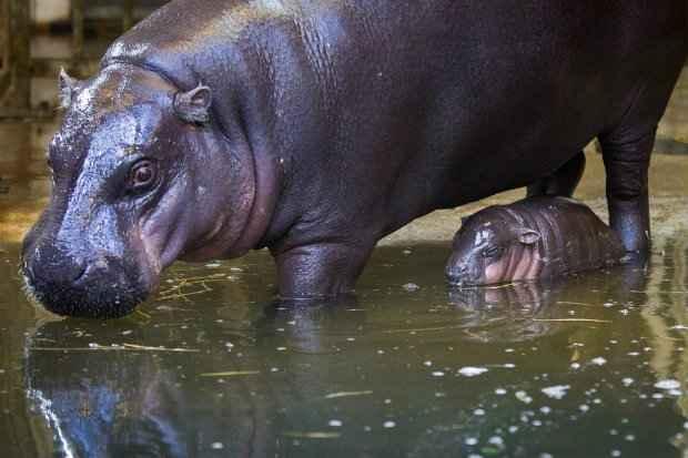 Bebê foi registrado dentro de piscina aquecida. (Foto: Alastair Johnstone/SWNS/Divulgação)